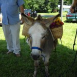 Willy The Donkey marched in the July 4th parade